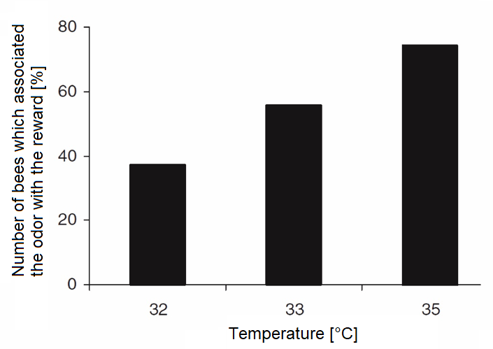 Figure 1: Proportion of bees showing associative learning after developing at different brood temperatures.