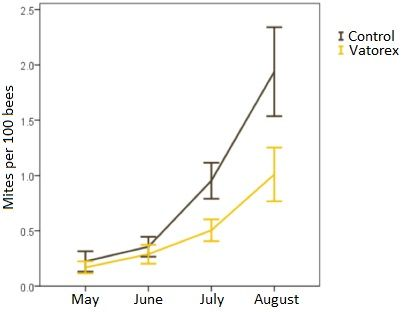Figure 1: Development of varroa infestation between May and August in bee colonies with the Vatorex system and in untreated control colonies. After 9 to 12 weeks of treatment with the Vatorex system, treated colonies had a reduced varroa infestation of about 50%.